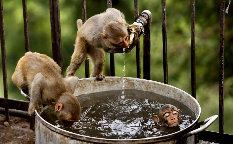 Monkey Pond